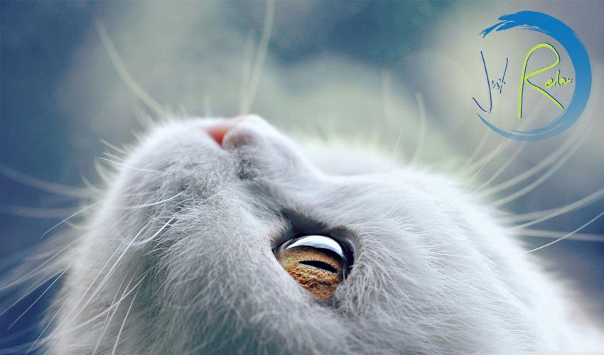 Cat-relax