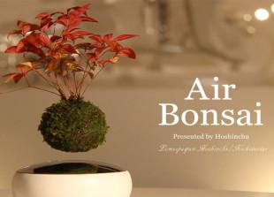 bonsaiair_funportal.lol/paryashhie-derevya/