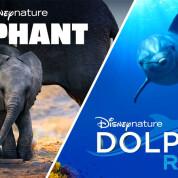 """""""Слон"""" і """"Риф Дельфіна"""""""
