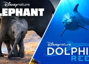 Слон-і-Риф-Дельфіна
