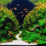 Бонсай — акваскейп в круглому акварiумi